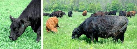 Kays-HomeFarm-Spring-Pasture